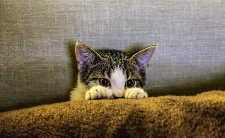 A fearful cat hiding